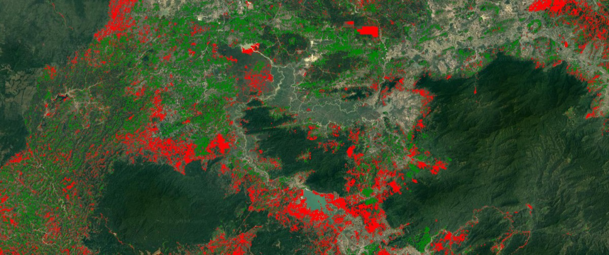 Mapping Forest Loss and Gain